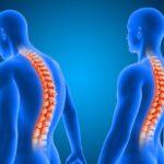 Las curvas de la columna y el desarrollo muscular