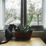 Plantas pet-friendly