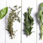 Cómo secar las hierbas aromáticas y medicinales