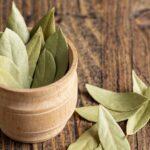 Laurel: usos y beneficios de esta planta milenaria