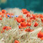 El poder de las flores en el origen de la vida